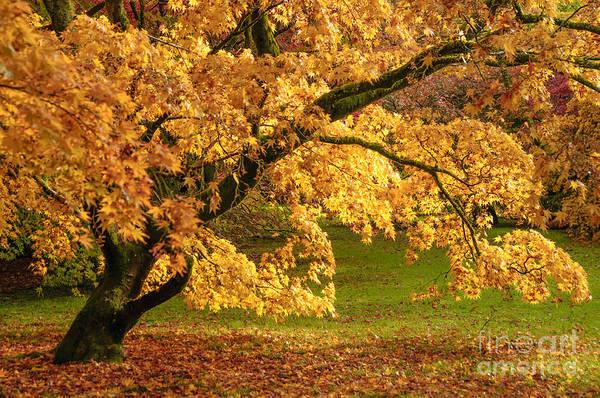 Arboretums Photograph - Westonbirt Arboretum by Amanda Elwell