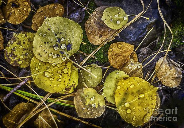 Photograph - Wet Aspen Floor by Bitter Buffalo Photography