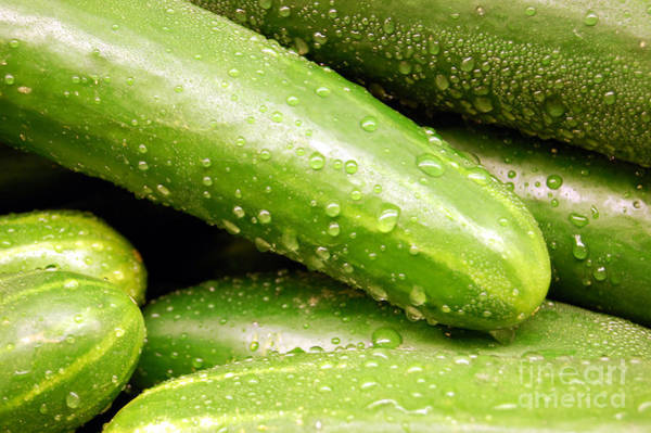 Photograph - Wet Delicious Cucumbers by Staci Bigelow