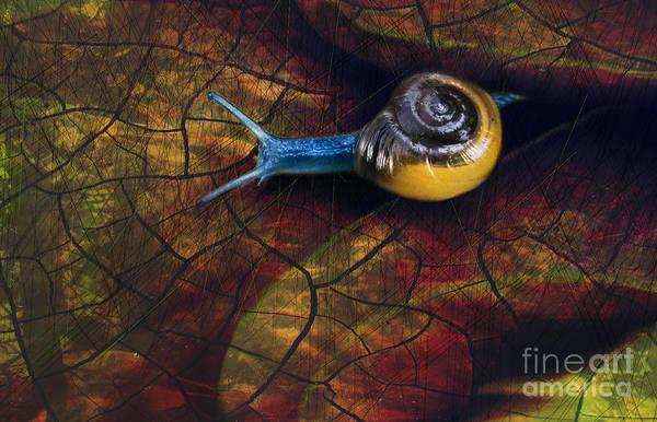Digital Art - Wet On Dry by Lisa Redfern