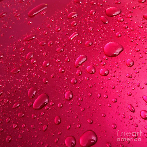 Photograph - Wet Pink by Olivier Le Queinec