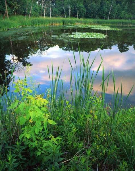 Photograph - Wetland Serenity by Ray Mathis