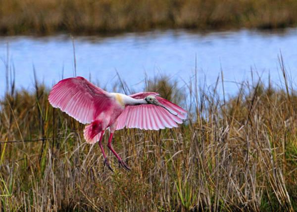 Photograph - Wetlands Landing by Bill Dodsworth