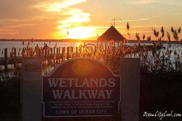 Photograph - Wetlands Walkway Sunset by Robert Banach