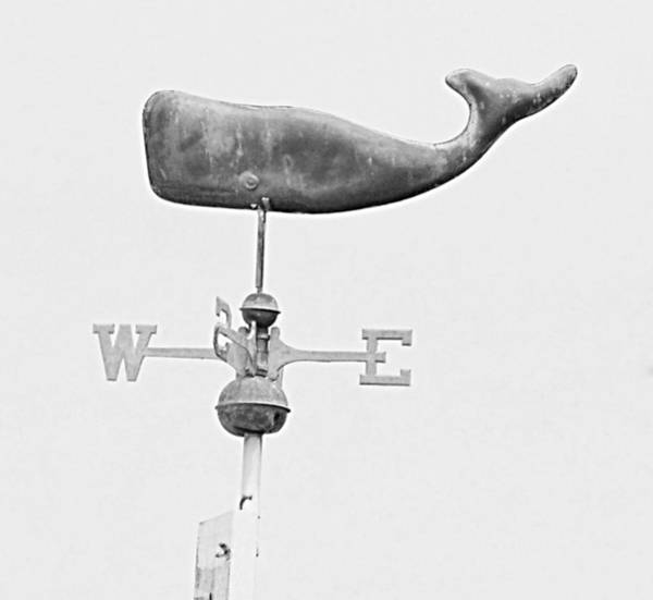 Photograph - Whale In The Sky by HW Kateley