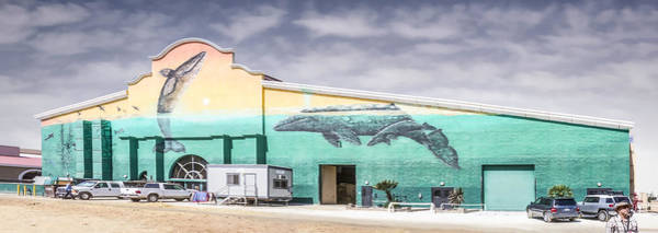 Digital Art - Whale Mural by Photographic Art by Russel Ray Photos