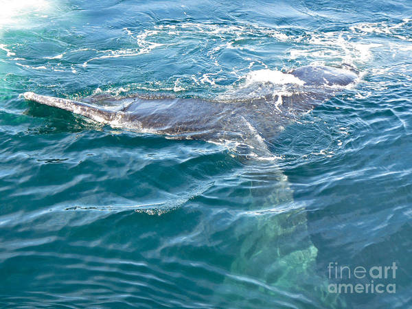 Photograph - Whale Tail Upclose by Bette Phelan