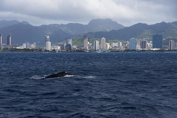 Photograph - Whale Watching In Honolulu Hawaii by Georgia Mizuleva
