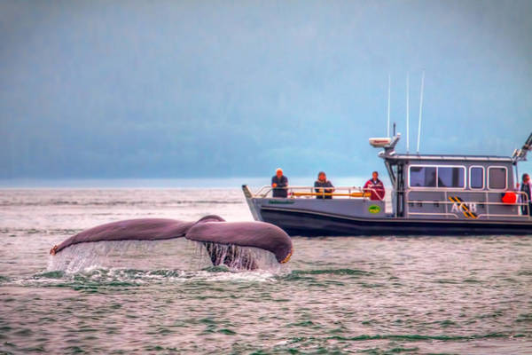 Wall Art - Photograph - Whale Watching by Tom Weisbrook