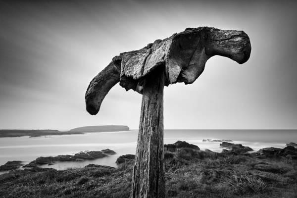 Whale Photograph - Whalebone by Dave Bowman