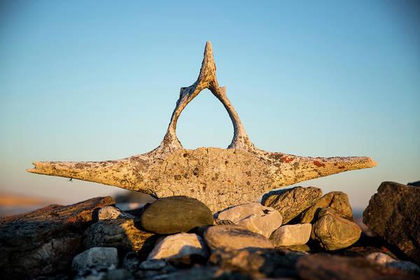 Bone Structure Wall Art - Photograph - Whalers Graves, Deadman Island by WorldFoto