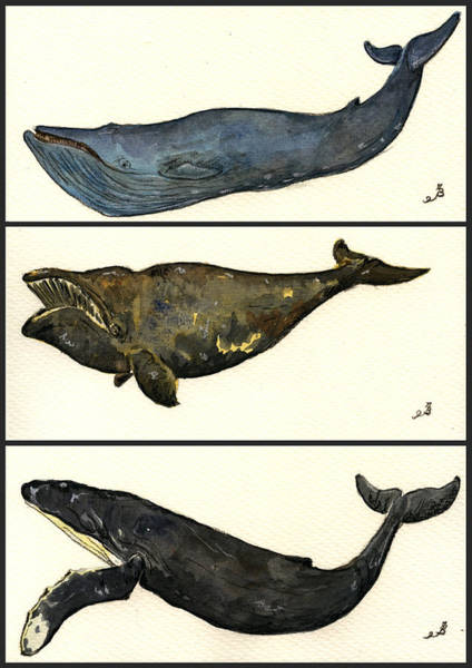 Right Painting - Whales Compilation 1 by Juan  Bosco