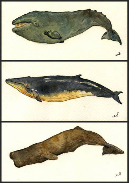 Cachalot Wall Art - Painting - Whales Compilation 2 by Juan  Bosco