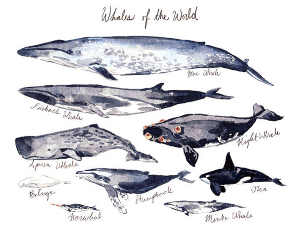 Save The Whales Wall Art - Painting - Whales Of The World by Laura Row