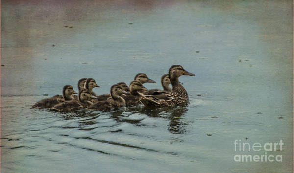 Brinton Photograph - What A Brood by Judy Wolinsky