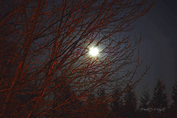 Photograph - What A Marvelous Night For A Moondance by Paulette B Wright