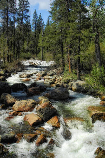Yuba River Photograph - What A Rush by Donna Blackhall