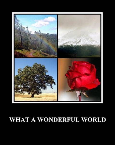 Photograph - What A Wonderful World by AJ  Schibig