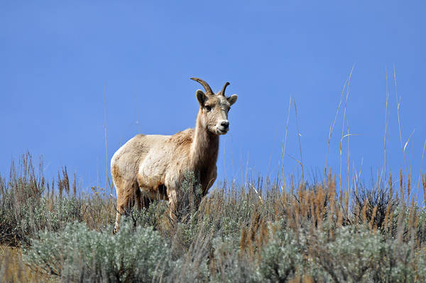 Photograph - What Are Ewe You Looking At? by Bruce Gourley