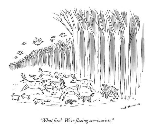 1998 Drawing - What Fire?  We're Fleeing Eco-tourists by Nick Downes