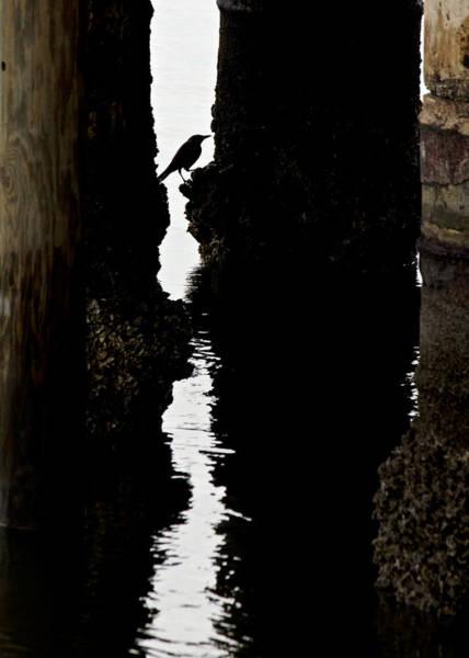 Cedar Key Photograph - What Lies Beneath by Penny Meyers