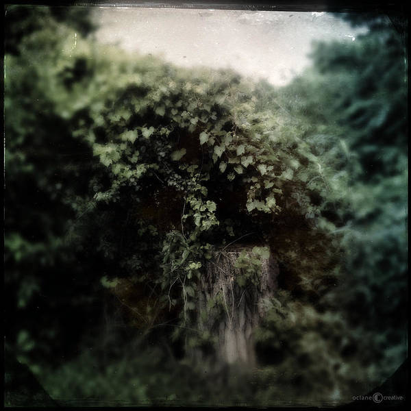 Photograph - What Once Was by Tim Nyberg