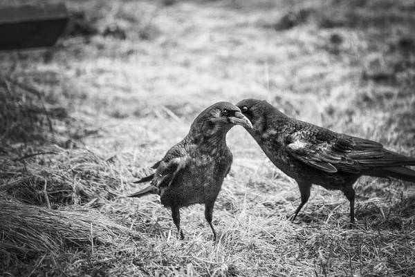 Susan Photograph - What The Raven Said by Susan Capuano