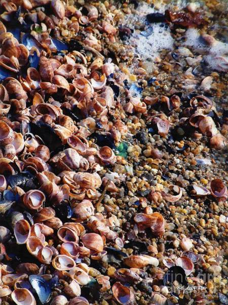 Painting - What The Shell's Going On by RC DeWinter