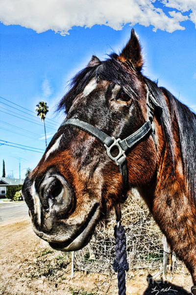 Norco Photograph - What You Looking At by Tommy Anderson