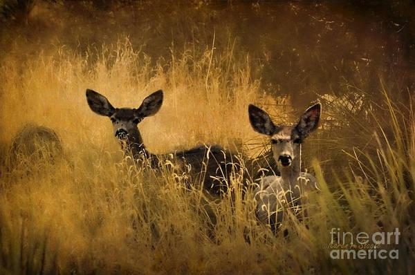 Mule Deer Photograph - What'cha Lookin' At by Karen Slagle