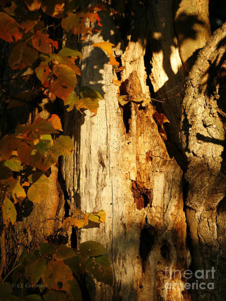 Photograph - What's In The Crevasses? by Carol Lynn Coronios