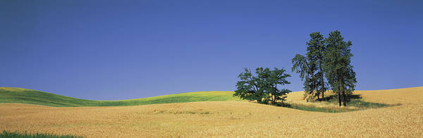 Wall Art - Photograph - Wheat Crop In The Field, Washington by Panoramic Images