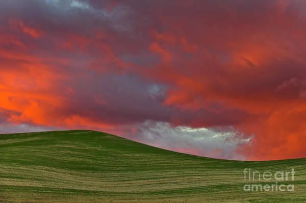 Photograph - Wheat Field At Sunset  by Yva Momatiuk John Eastcott