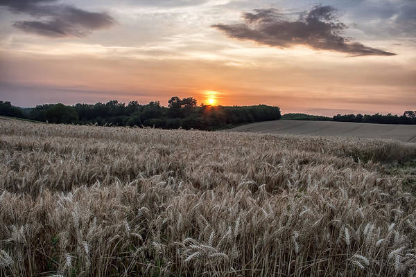 Photograph - Wheat Field Sunset In France by Georgia Fowler
