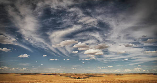 Expanse Photograph - Wheat Field Under A Blue Sky With Cloud by Marg Wood