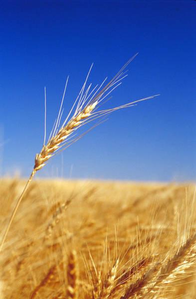 Wall Art - Photograph - Wheat Fields by James Steinberg