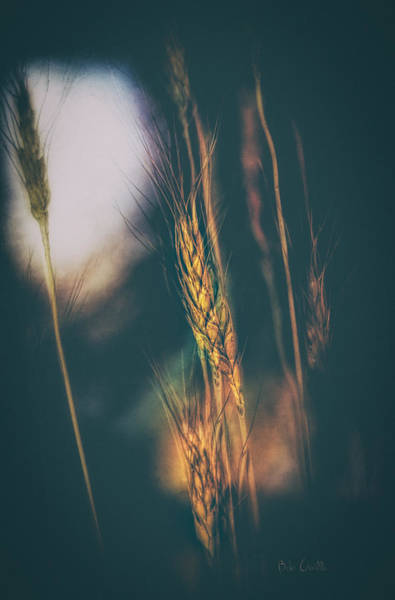 Abstract Impressionism Photograph - Wheat Of The Evening by Bob Orsillo