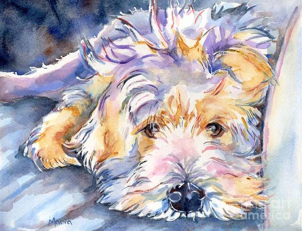 Terrier Painting - Wheaten Terrier Painting by Maria's Watercolor