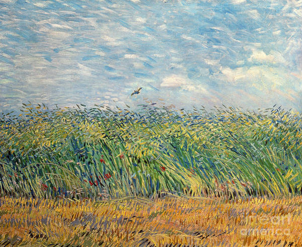 Wheat Wall Art - Painting - Wheatfield With Lark by Vincent van Gogh