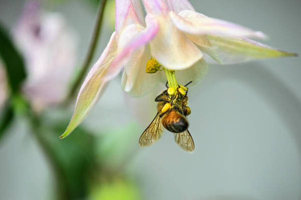 Bee Photograph - Wheeeee by Susan Capuano