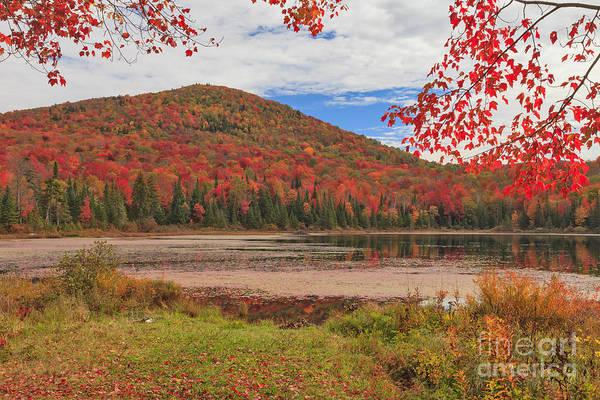 Photograph - Wheeler Pond Postcard by Charles Kozierok