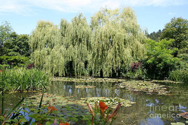 Claude Monet Photograph - Wheeping Willow At Monets Lilypond by Christiane Schulze Art And Photography