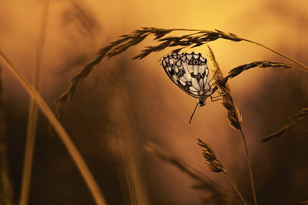 Wheat Wall Art - Photograph - When All Dreams Come True by Fabien Bravin