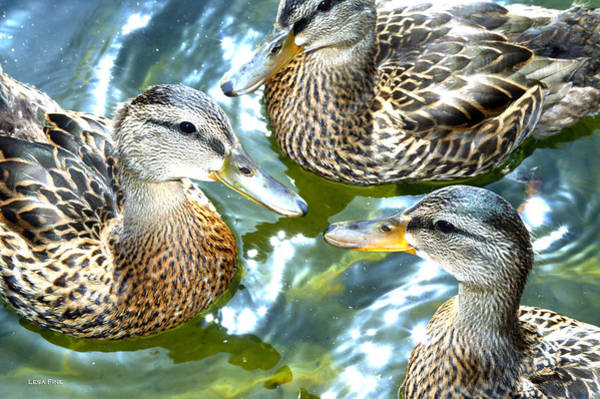 Photograph - When Duck Bills Meet by Lesa Fine