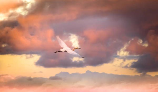 In Flight Photograph - When Heaven Beckons by Karen Wiles