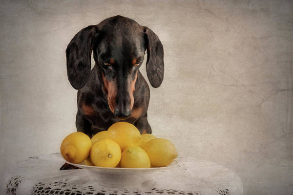 Wall Art - Photograph - When Life Gives You Lemons... by Heike Willers