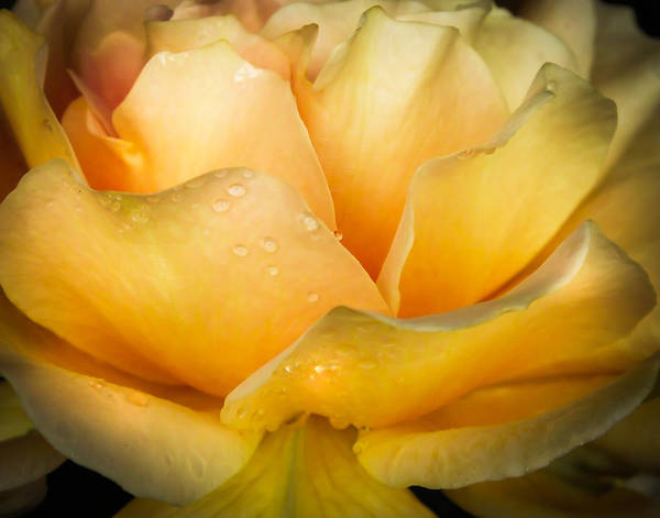 Something Different Photograph - Inner Beauty by Karen Wiles