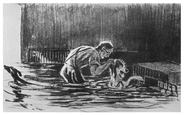 1924 Drawing - When Pavlov's Dogs Are Trapped by Mary Evans Picture Library