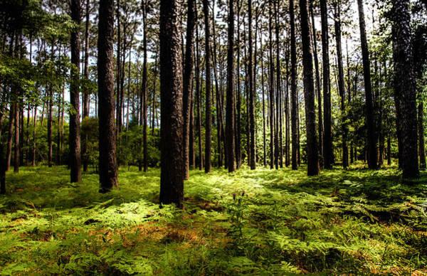 Deep Woods Wall Art - Photograph - When The Forest Beckons by Karen Wiles