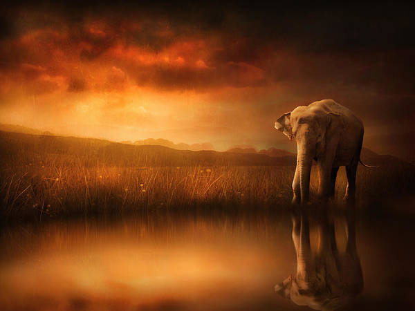 African Elephant Photograph - When The Sun Goes Down by Jennifer Woodward
